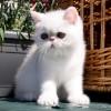 Nuevas fotos de nuestros gatitos