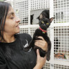 The helpless black cats from Benimàmet's Animal Shelter (Valencia-Spain)