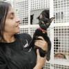 Los gatos negros desamparados de la Protectora de Benimàmet (Valencia-España)