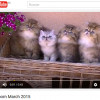 Nuevo video de nuestros gatitos 2015 :)