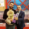 CFA Cat Show in Seville March 3th and 4th2018