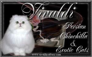 Vivaldi Cattery