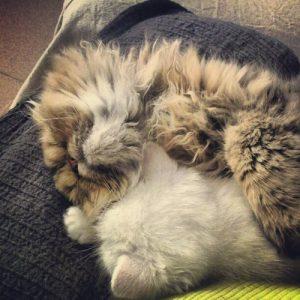 Chincholines durmiendo