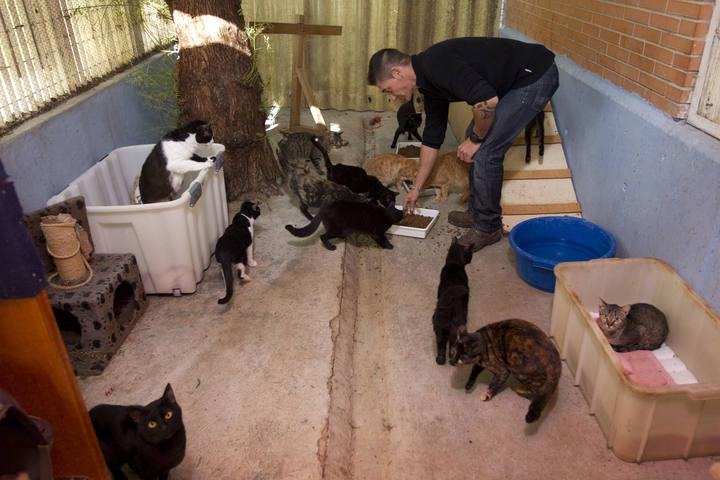VALENCIA/// Reportaje sobre gatos negros